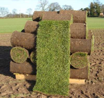 Turf in Pallet quantities of 50 roles per Pallet shipped to your door
